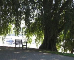 Brisbane Parks